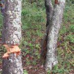 Kongwe Forest